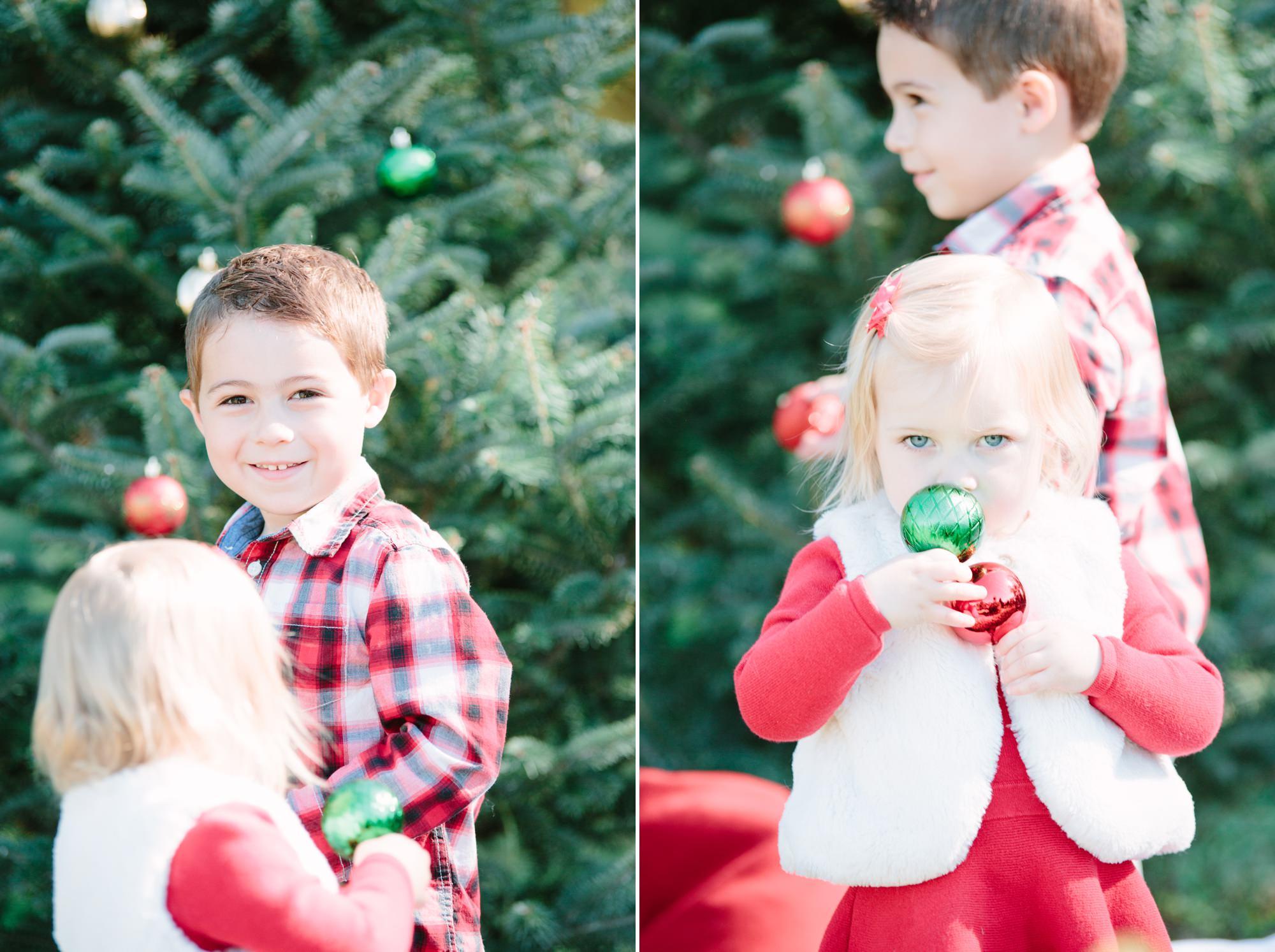 Christmas Tree Farm Mini Sessions East Bridgewater Ma Ali B Photography